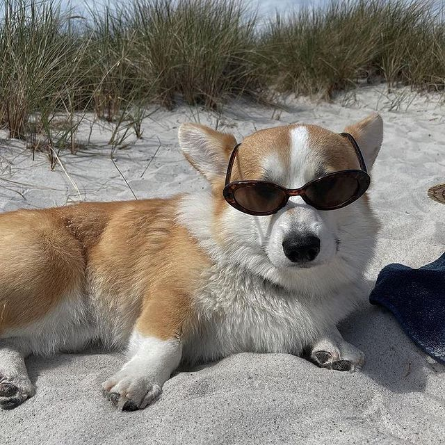 Dreaming about those days at the beach